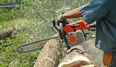 Abattage arbres ile de Ré