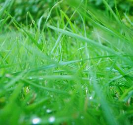 Herbe humide irrigation et drainage ile de ré