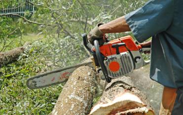 Abattage arbre ile de Ré